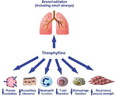 Theophylline Level Toxicity Symptoms